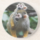Baby Squirrel Monkey  Coaster