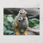 Baby Squirrel Monkey Postcard