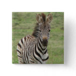 Baby Zebra Square Pin