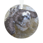 Bathing Osprey Ornament