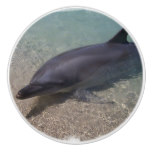 Beached Dolphin Ceramic Knob