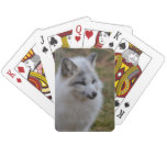 Beautiful White Swift Fox Playing Cards
