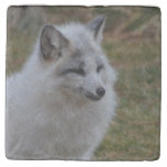 Beautiful White Swift Fox Stone Coaster
