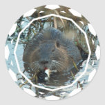 Beavers Habitat Stickers