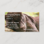 Black Panther Sleeping Business Card