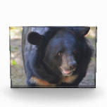 Black Spectacled Bear Acrylic Award