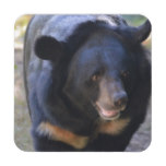 Black Spectacled Bear Beverage Coaster