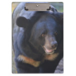 Black Spectacled Bear Clipboard