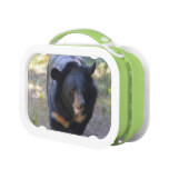 Black Spectacled Bear Lunch Box