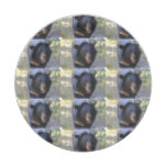 Black Spectacled Bear Paper Plate