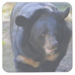 Black Spectacled Bear Square Paper Coaster