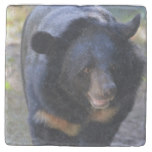 Black Spectacled Bear Stone Coaster