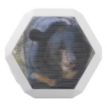 Black Spectacled Bear White Bluetooth Speaker