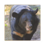 Black Spectacled Bear Wood Coaster