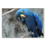 Blue Hyacinth Macaw Table Number