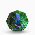 Blue Poison Arrow Frog Award