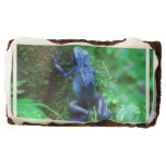 Blue Poison Arrow Frog Brownie