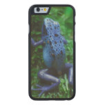 Blue Poison Arrow Frog Carved Maple iPhone 6 Slim Case