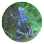 Blue Poison Arrow Frog Dinner Plate