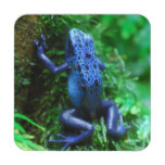 Blue Poison Arrow Frog Drink Coaster