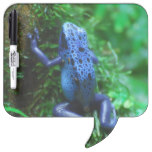 Blue Poison Arrow Frog Dry-Erase Board