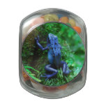 Blue Poison Arrow Frog Jelly Belly Candy Jar