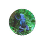 Blue Poison Arrow Frog Jelly Belly Tin