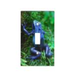 Blue Poison Arrow Frog Light Switch Cover