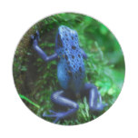 Blue Poison Arrow Frog Paper Plate