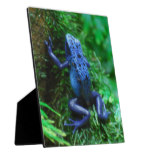 Blue Poison Arrow Frog Plaque
