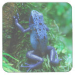 Blue Poison Arrow Frog Square Paper Coaster