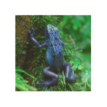 Blue Poison Arrow Frog Wood Wall Decor