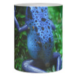 blue-frog-1.jpg flameless candle