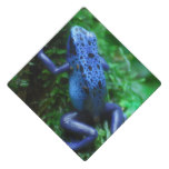 blue-frog-1.jpg graduation cap topper
