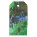blue-frog-1.jpg wooden gift tags