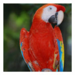 Bright Colored Parrot Poster