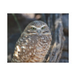 Burrowing Owl Canvas Print