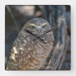 Burrowing Owl Square Wall Clock