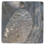 Burrowing Owl Stone Coaster