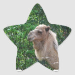 Camel Photo Design Sticker