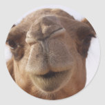 Camel Stickers