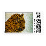 Cheetah Postage Stamp