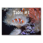 Clownfish Table Number