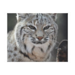 Creeping Bobcat Canvas Print