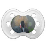 Curious African Crowned Crane Pacifier