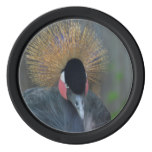 Curious African Crowned Crane Poker Chips Set