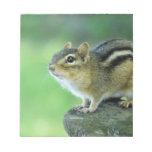 Curious Chipmunk  Notepad