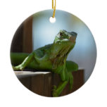 Curious Iguana Ceramic Ornament