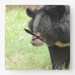 Cute Black Bear Square Wall Clock