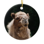 Cute Camel Ceramic Ornament